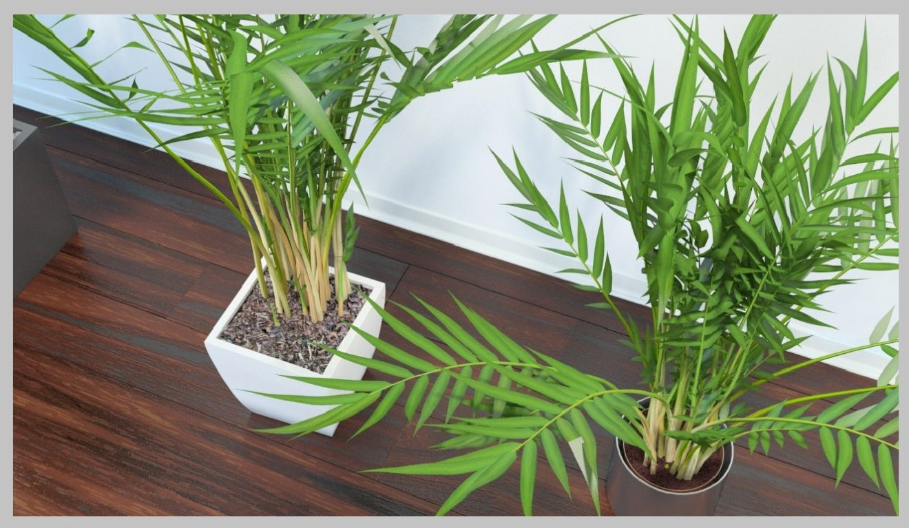Easy maintain indoor plants to have at home ideal for Areca palm safe for cats