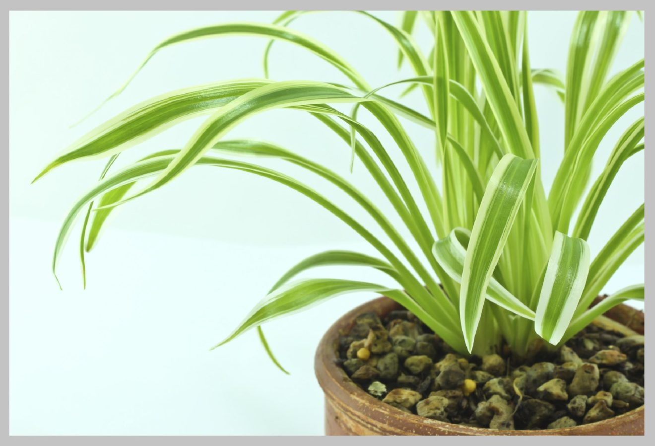 Easy maintain indoor plants to have at home ideal houseplants - Easy indoor plant ...