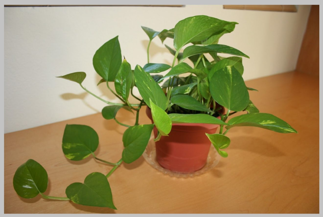 Easy maintain indoor plants to have at home ideal houseplants - Easy maintenance indoor plants ...