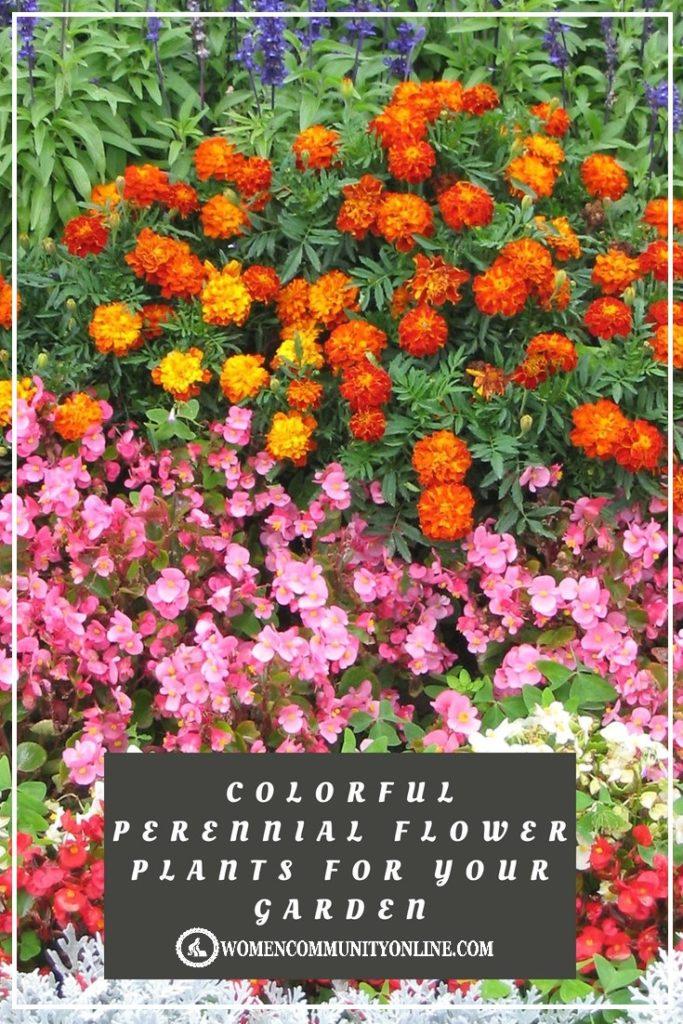 15 Best Perennial Flower Plants For Your Garden Women Community Online